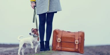 Thinking of Taking Your Pets Abroad? Here is What You Should Keep in Mind